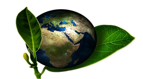 Qualidade de Vida e Meio Ambiente Quais são as suas atitudes para preservar o meio ambiente?